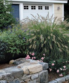 Perfect grass to put in front garden, instead of expensive and high-maintenance shrubs: fountain grass.