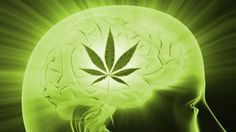 Recent studies (as well as mounting anecdotal reports) suggest that medical marijuana can assist with the treatment and management of migraines...