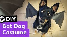 DIY Bat Dog Halloween Costume   Sea Lemon