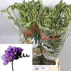 Freesia Double Blue Bayou is actually purple! 2018 Wedding Trend: Ultra Violet Purple. For lilac and purple wedding flowers to suit your colour scheme, visit our website at www.trianglenursery.co.uk/fresh-flowers! Very popular in wedding flowers and flower arrangements.