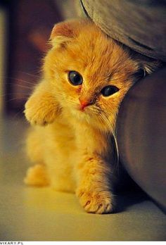 I just love cats this is why they are my favorite animal evr!! They look like this can you say no to thus FACE??!!!!