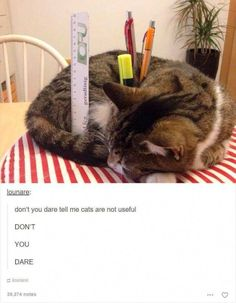 1787cbda36 29 Funny Tumblr Posts In Praise Of Animals  funnyanimals Funny Animal  Pictures