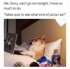 Memes Guaranteed To Make You Laugh On .Check out some of our favorite dog memes now and don't forget to pin your favorite! Funny Dog Memes, Funny Dogs, How To Start Yoga, Funny Animal Pictures, Dog Pictures, Animal Quotes, How To Relieve Stress, Best Dogs, Lol