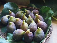 Fig… The Taste And Scent Of Provence  delicius, I wish  mine   look like this - barbarasangi