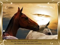 """Pferdeweisheit """"Landuli"""""""