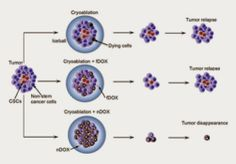 Cryoablation with nanoparticle-medicated chemotherapy effective in destroying cancer stem cells  Read more: http://www.stemcellsfreak.com/2014/03/cancer-stem-cells-cryoblastation.html#ixzz2vvfvnJuQ