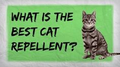 How to Make a Homemade Cat Repellent - Home Remedies for Repelling Cats « Housekeeping