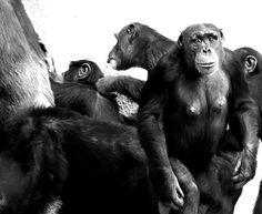 Leipzig Zoo.Foto: Ela von Immertreu.