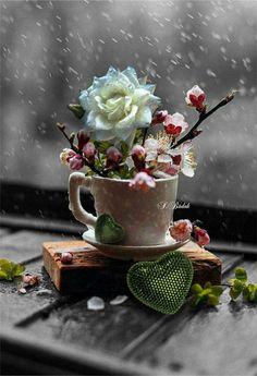 Flowers rain window