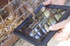 Los Orangutanes del Zoo Jungle Island de Miami se Comunican mediante iPad