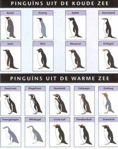 pinguins uit de warme en koude zee