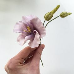 Lisianthus sugar flower | Ron Ben-Israel