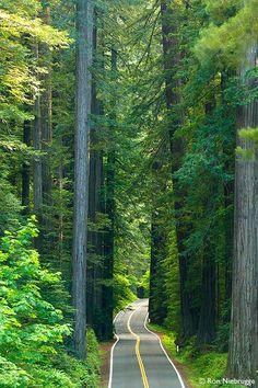 Avenue of the Giants, Redwood Highway, CA
