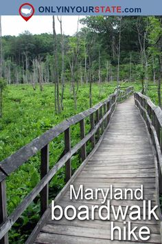 Travel | Maryland | Attractions | Boardwalks | Places To Visit | USA | East Coast | Outdoor | Adventure | Waterfront | Old Line State | Ocean City | Things To Do | Islands | Swamp | Forest | Natural Beauty | Easy Hikes | Promenade | Sanctuary | Fishing Pier | Beaches | Nature | Day Trips | Boardwalk Hike