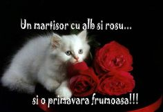 Wallpaper of White Kitten and Red Roses for fans of Kittens. White Kitten and Red Roses Kitten Wallpaper, Rose Wallpaper, Beautiful Red Roses, Beautiful Photos Of Nature, Amazing Flowers, Romantic Roses, Kitten Love, I Love Cats, Cute Cats And Kittens