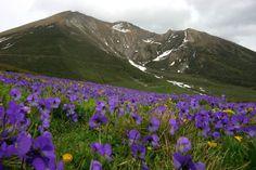 Fioriscono le viole nel Parco Orsierà Rocciavré  #myValsusa 24.06.16 #fotodelgiorno di Dante Alpe