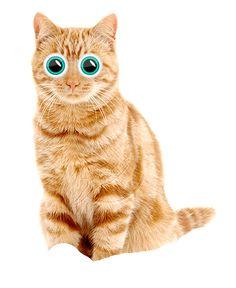 Интернет магазин товаров для кошек cat-box.ru У нас вы можете купить когтеточки, туалеты, переноски и интерактивные игрушки для кошек. Доставка по всей России.