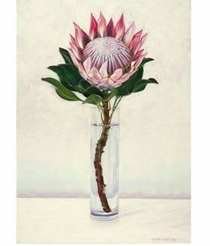 King Protea - original oil painting by Eleanor Butler available on… Protea Art, Protea Flower, Art Floral, Floral Drawing, Pastel Drawing, Afrika Tattoos, King Protea, You Draw, Botanical Prints