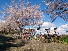 Copyright © とも 様 / 2012 Mu P8 / ひきこもり、出無精がDAHONとの出会いによって生活が一変。夫や仲間との楽しいサイクリング生活に忙しい日々です!