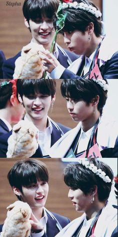 cute but like minho's fond look has me soft Kpop Couples, Fandom, Kids Wallpaper, Lee Know, K Idols, Pop Group, Squirrel, Boys, Cute
