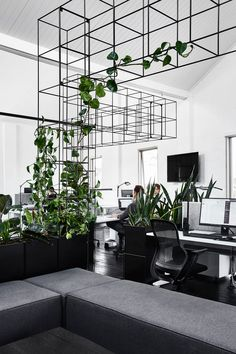 Tom Robertson Architects designed a new home for Candlefox HQ in Melbourne with a graphic, black and white interior dotted with a growing indoor garden. garden inspiration green Candlefox HQ: A Graphic, Black and White Office in Melbourne - Design Milk Black And White Office, Green Office, Black And White Interior, Small Office, Black And White Design, Black White, Industrial Office Design, Office Interior Design, Office Interiors
