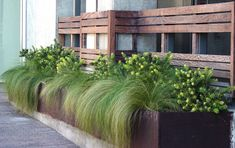 mexican feather grass spilling over via Garden Ally Metal Planter Boxes, Wood Planters, Flower Planters, Metal Box, Planter Ideas, Steel Planter, Modern Planters, Mexican Feather Grass, Stipa