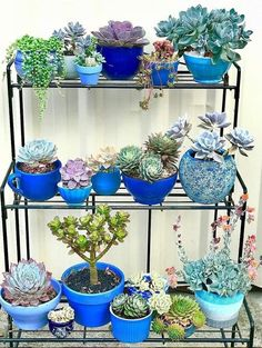 49 Ideas For Succulent Planter Centerpiece Cactus Succulents In Containers, Cacti And Succulents, Planting Succulents, Planting Flowers, Jardim Vertical Diy, Vertical Garden Diy, Vertical Gardens, Succulent Gardening, Container Gardening