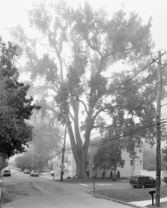 The idiosyncratic trees of New York Cityphotographed by Mitch Epstein