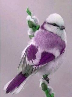 Beautiful birdie