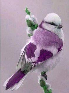 Beautiful birdie