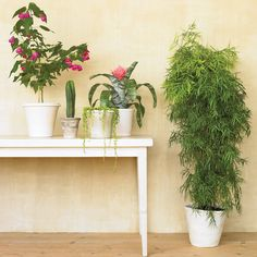 There is an entire collection of air-purifying houseplants that are surprisingly easy to grow. Sound like a win-win? Then check out these plants.
