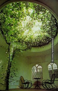 Ficus carica (the plants) makes a breathtaking display of aerial greenery fillin. Ficus carica (th House Ceiling Design, Home Ceiling, Ceiling Windows, Skylight Window, Glass Ceiling, Ceiling Lamps, Ceiling Lighting, Window Sill, Window Glass