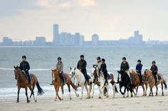 Horseback riding on the beach at Nieuwvliet-Bad, with the skyline of Vlissingen in the background.
