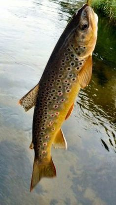 This picture reresents one of the many specializations in New England, fishing.
