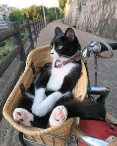 Daily Routine Crazy Cats, I Love Cats, Cool Cats, Animals And Pets, Funny Animals, Animal Jokes, Cute Little Animals, Cute Creatures, Beautiful Cats