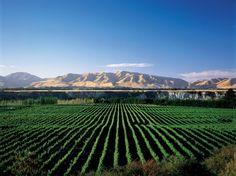 NZ retains highest bottle price in UK
