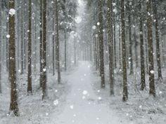 Winter Landscape, Near Villingen-Schwenningen, Black Forest, Baden-Wurttemberg, Germany, Europe