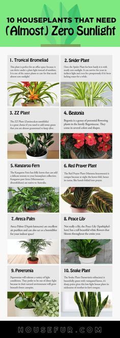 easy house plants Do you live in a dark home or an apartment with low-lighting? Are you looking for Houseplants That Need (Almost) Zero Sunlight or houseplants that are easy to care f Planting Bulbs, Planting Flowers, Easy House Plants, Low Light Plants, Low Light Houseplants, Inside Plants, Plant Aesthetic, Best Indoor Plants, Indoor Cactus