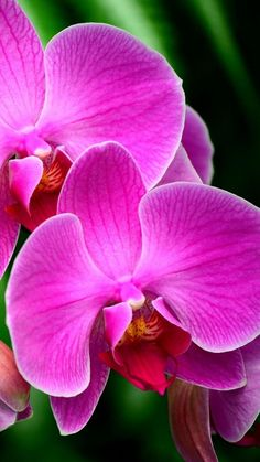 orchid, flower, branch, exotic