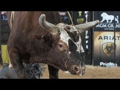 Top 10 PBR(Professional Bull Riders) bull performances of 2012  http://www.pbr.com