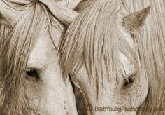 International Equine Artists