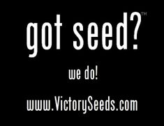 Victory Seeds® offers a wide variety of rare heirloom and open-pollinated vegetable, heirloom herb, and heirloom flower seeds. The on-line heirloom seed catalog is maintained to reflect seeds available in stock. Open-pollinated, heirloom seeds only.