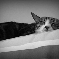 sweet dream..