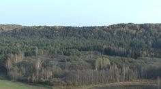 Stock Video Footage of Autumn view from the birch.