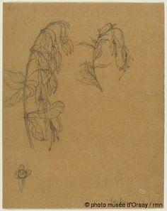 René Lalique Deux études de fleurs et feuilles de fuschia et une étude de fleur de fuschia entre 1860 et 1945 crayon sur papier végétal H. 0.28 ; L. 0.22 musée d'Orsay, Paris, France