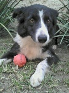 Does An Apple A Day Keep The Vet Away