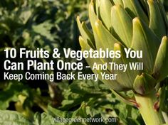 Most of the foods we grow are annuals. In other words, each winter, annuals die and must be replanted in the spring. Perennials, on the other hand, will keep coming back year after year. Here are some delicious perennials to plant now.