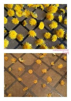 How long do dried dandelions keep? if they are completely dry, they should last for at least months in an air tight container Dandelion Uses, Dandelion Recipes, Dandelion Flower, Taraxacum Officinale, Embroidered Flowers, Flower Embroidery, Embroidery Stitches, Infused Oils, Hobby Farms