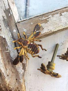 Emenee Decorative Hardware Bee Cabinet Knob 1 | Nursery ...