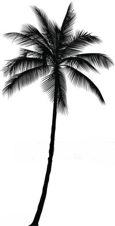 Best Palm Illustrations, Royalty-Free Vector Art and Clip Art - Palm Tree Vector Art Illustration - Palm Tree Sketch, Palm Tree Drawing, Tree Sketches, Tattoo Sketches, Palm Tattoos, Body Art Tattoos, Tatoos, Tree Illustration, Illustrations